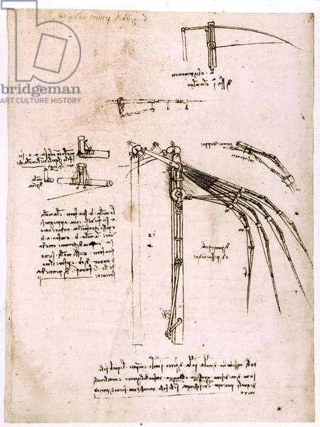 Etude sur les ailes. Codex Atlantique. Codex atlantique, Dessin de Leonard de Vinci (Leonardo da Vinci) vers 1499.