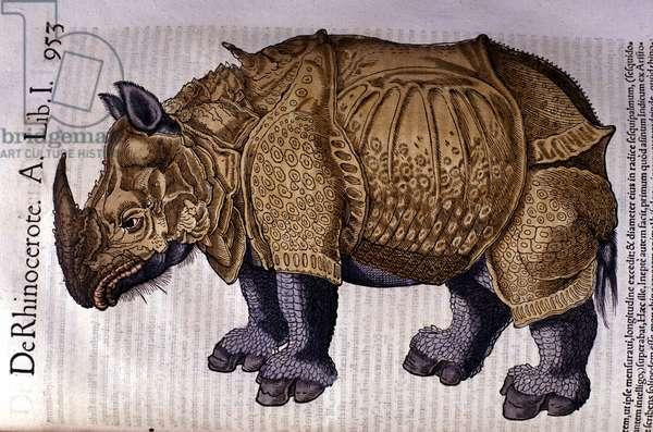 "The rhinoceros after ""Historia Animalium"" by Conrad Gesner, Tiguri 1560."