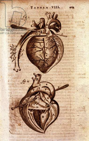 "The heart of Bartholin's ""Anatomy"""", 17th century. w"