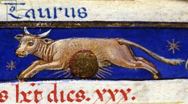 Sign of the zodiac: the bull. 15th century manuscript.
