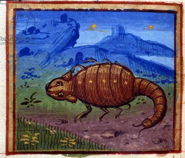 Scorpion sign. Italian horoscope, mid-15th century.