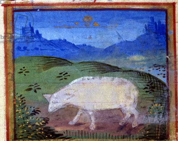 Sign of the ram. Italian horoscope, mid-15th century.