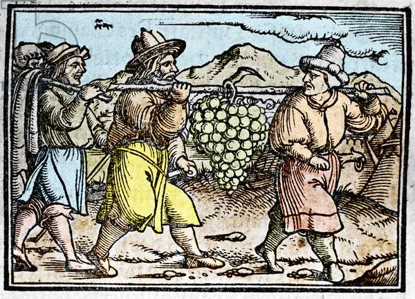 """The return of Joshua and Caleb with a huge bunch of grapes from the land of Canaan (Promised Land). Chronicle by Johann Stumpff """""""" Den edlen strucen besten fromen"""""""", 1550."""