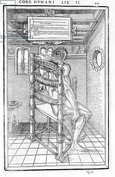 "Skull cut. Anatomical board of """" De dissectione partium corporis humani lbri tres..."""" Carlo Stefano Riverio, Paris 1545"