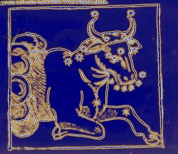 Horoscope: the sign of the bull.