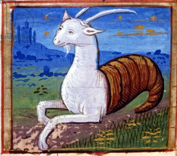 Sign of the Capricorn. Italian Horoscope, mid-15th century.