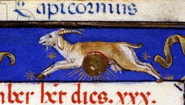 Sign of the zodiac: the capricorn. 15th century manuscript.