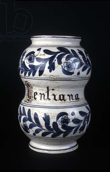 Albarelle: former 16th century pharmacy vase containing gentian. Museum of Science and Technology, Milan.