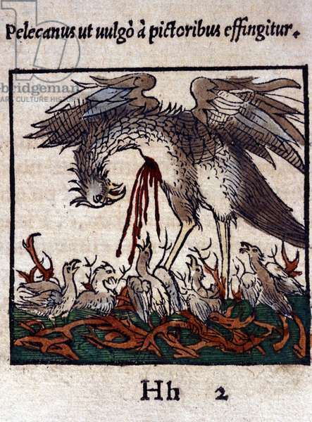 The legend of the pelican: he gives his blood and bowels to feed his young. From Historiae animalium by Konrad Gesner, Tiguri, 1555. Bibl. Nazionale Braidense, Milan.