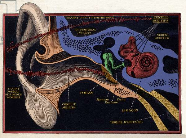 Anatomical pattern of a human ear. Fine colour engraving of the 19th century beginning of the 20th century.