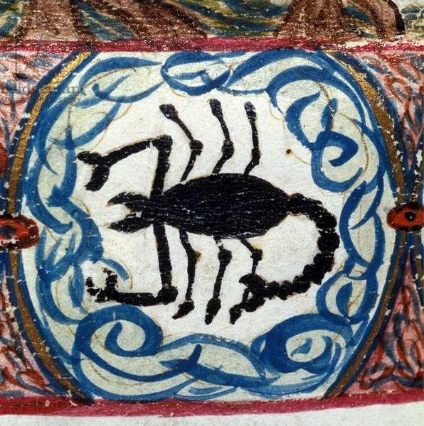 Scorpion sign. Italian horoscope dating from the mid-15th century.