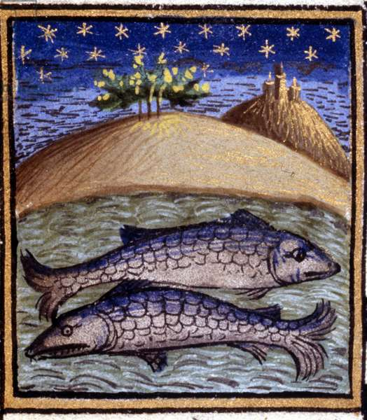 The Pisces. Miniature of a horoscope. 15th century manuscript. Bibl. Trivulziana, Milan.