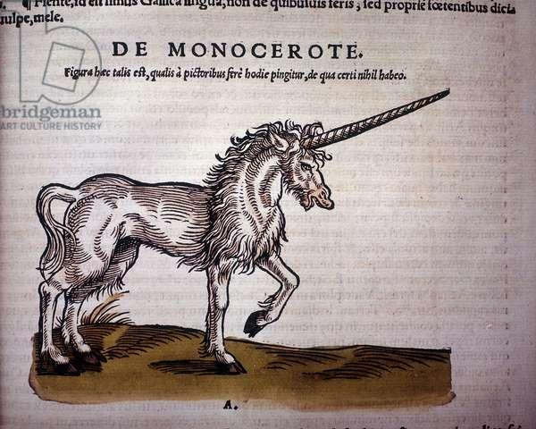 Unicorn, illustration from 'Historiae Animalium' by Conrad Gesner, 1551 (colour litho)