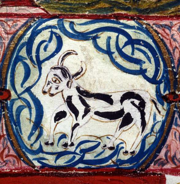 Sign of the Taurus. Italian horoscope dating from the mid-15th century.
