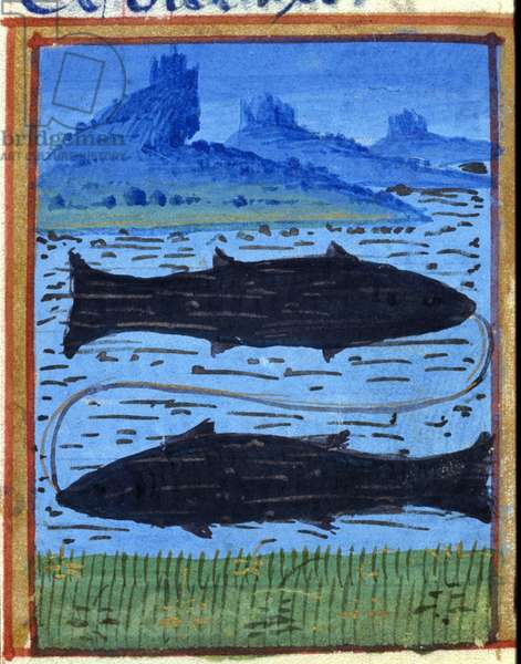 Sign of fish. Italian horoscope, mid-15th century.