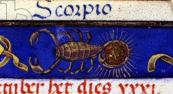 Sign of the zodiac: the scorpion. 15th century manuscript.