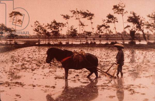 Japanese worker ploughing rice field, Japan, c.1880 (hand-coloured photo)