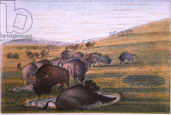 Bison, No. 2 of 10, Colored Drawing, George Catlin, 1832