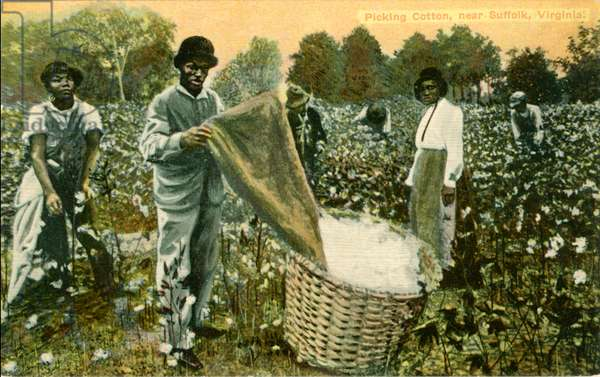 Group of African-American Cotton Pickers in Field, Portrait, near Suffolk, Virginia, USA, Hand-Colored Postcard, circa 1910