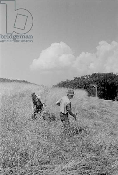 Workers Cutting Hay in Field, Windsor County, Vermont, USA, Arthur Rothstein for Farm Security Administration (FSA), September 1937