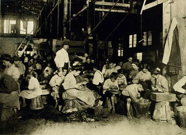 Women and Children Working in Vegetable Cannery Preparing Beans, 1912
