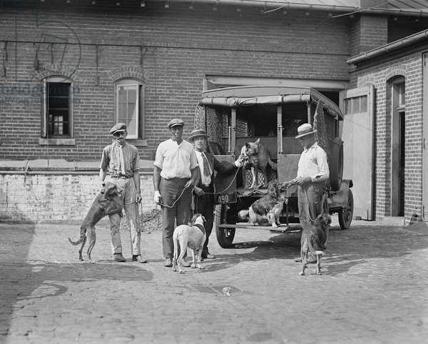 Group of Dog Catchers, Washington DC, USA, 1924 (b/w photo)