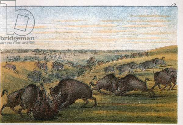 Bison, No. 1 of 10, Colored Drawing, George Catlin, 1832