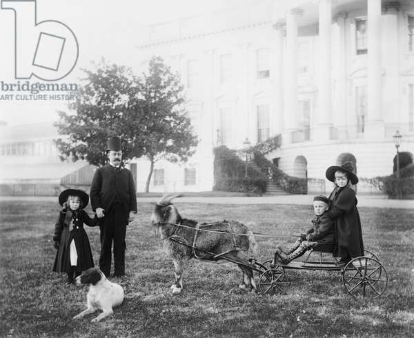 """Major Russell Harrison, son of U.S. President Benjamin Harrison, with his daughter Marthena and nephew and niece (Benjamin """"Baby"""" and Mary McKee) on a cart pulled by the presidential pet goat """"Whiskers"""" at the White House, Washington DC, USA, 1889-93 (b/w photo)"""