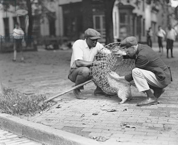 Dog Catcher, Washington DC, USA, 1924 (b/w photo)