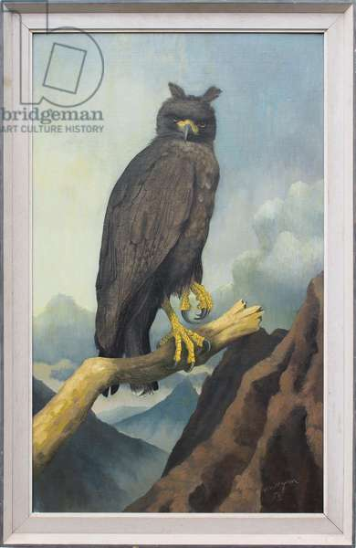 South American Crested Eagle, 1956 (oil on board)