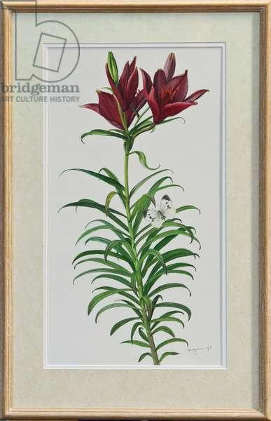 Asiatic Hybrid Lily, 1997 (w/c)