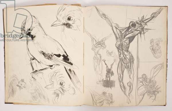 Bird sketches, c.1952 (pencil and pen & ink)