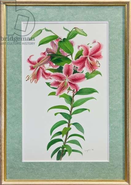 Lilium Auratum, 1996 (w/c)