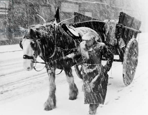 'A dying mode of transport', a horse and cart in a winter snowstorm, 1955 (b/w photo)