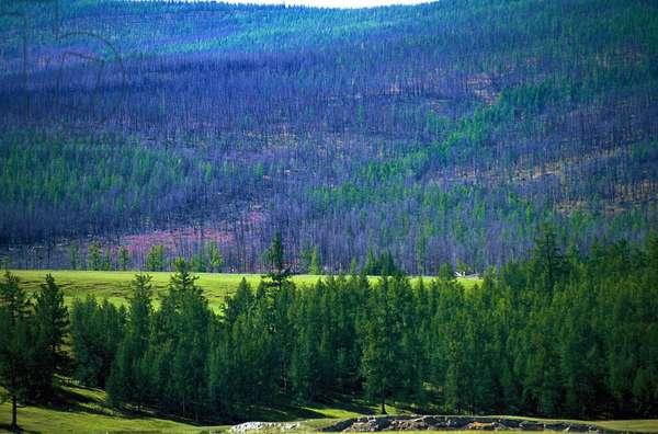 Northern Mongolia landscape, KHATGAL, MONGOLIE