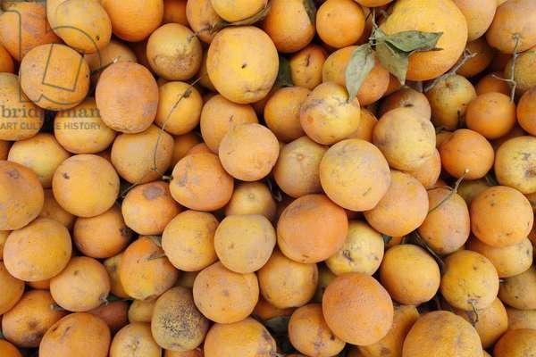Oranges from Morocco, Marrakech, Morocco