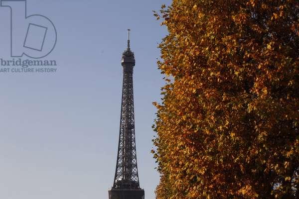 Eiffel tower and autumn leaves, Paris, France