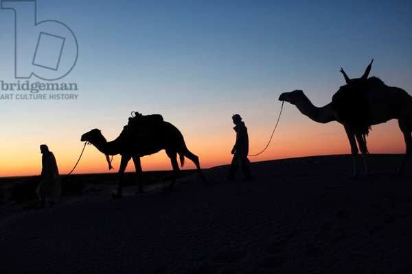 Camel drivers at dusk in the Sahara desert, Douz, Tunisie