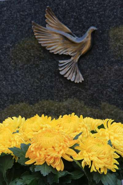 Chrysanthemums on a grave, Coulommes, France