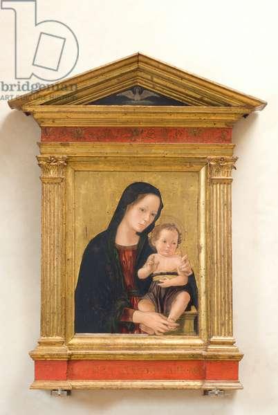 Madonna and Child Jesus, c.1470-1490 (tempera on panel)