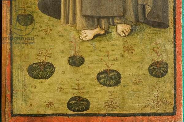 Saint Francis of Assisi, 1496 (tempera on panel)