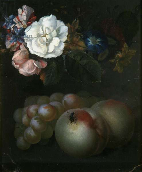 Study of Fruit and Flowers, 1721 (oil on board)