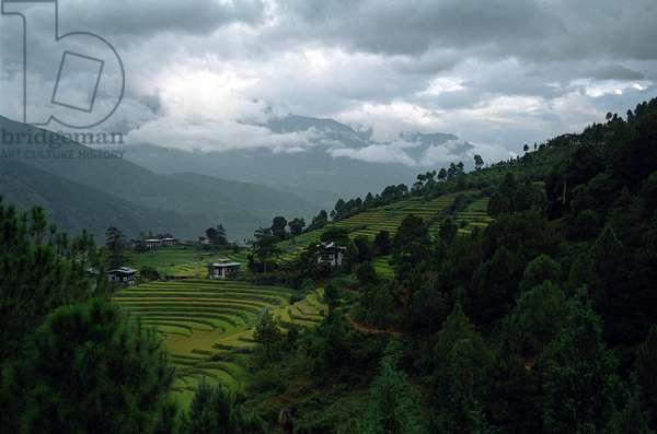 Bhutan - Terrassed fields
