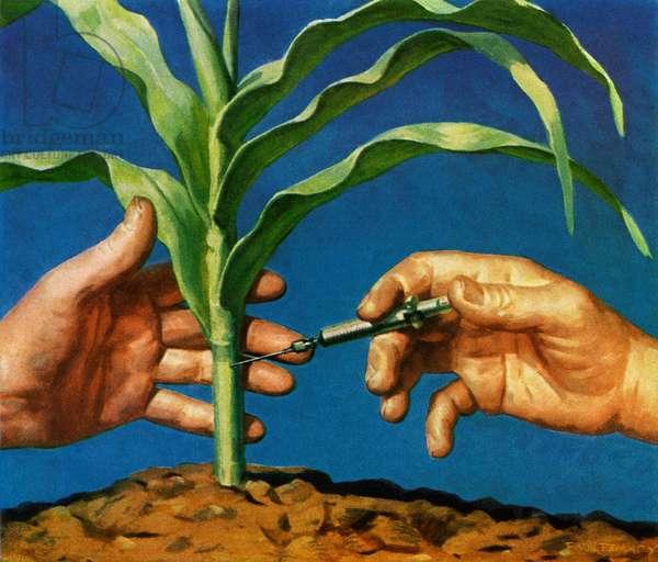 Genetic Modification of Corn, 1952 (screenprint)