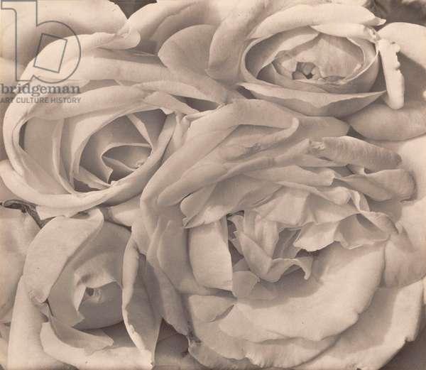 Roses, Mexico by Tina Modotti, 1924 (platinum print)