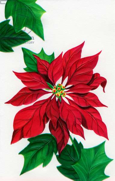 Christmas Poinsettia Design, 1940s (lithograph)