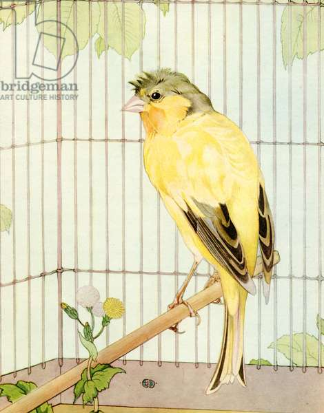 Parakeet in a Birdcage by Julius Detmold, 1915 (screen print)