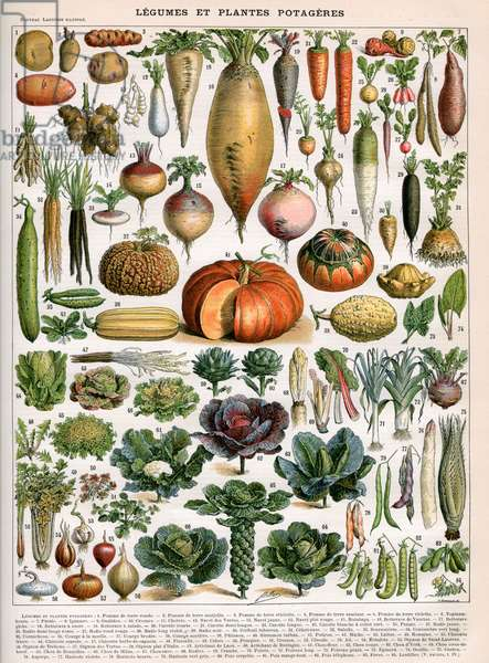 Illustration of Vegetable Varieties, c.1905-10 (colour litho)