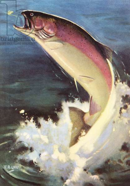Sport Fishing: Leaping Rainbow Trout, 1950 (colour litho)