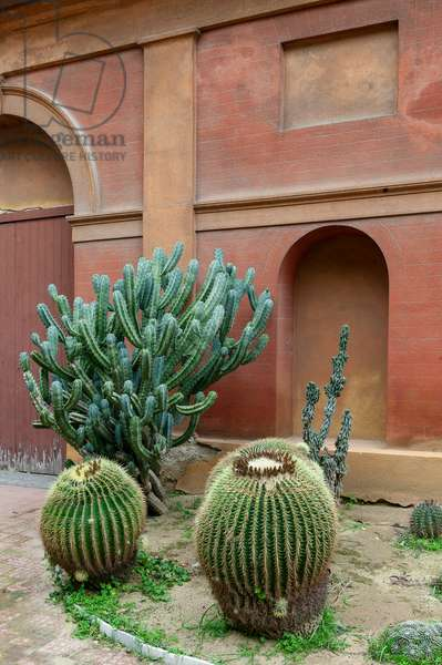 A corner of the garden with cacti, The Botanical Gardens, Palermo, Sicily, Italy (photo)